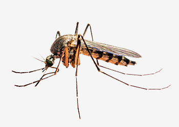 Mosquito Yard Pest Control Get Rid Of Mosquitoes