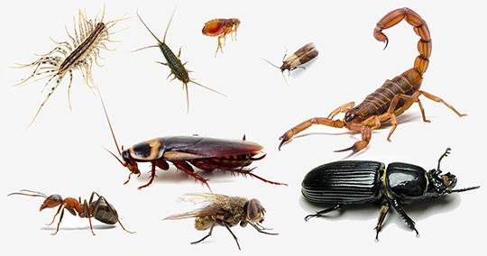 Pest Control for Your Home: Easy and Effective Approaches