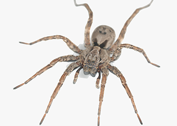 Spider control get rid of spiders for How to stop spiders entering your house